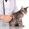 Ветеринарные клиники в Великом Устюге